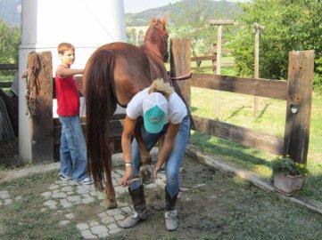 Anche preparando i cavalli, solo inglese