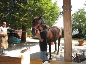 Nel corso intensivo si segue il cavallo in tutto, anche assistendo il maniscalco