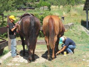 Curare il proprio cavallo è un dovere