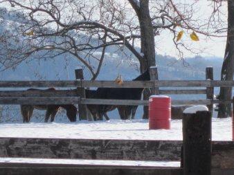 Ecco la prima neve al ranch