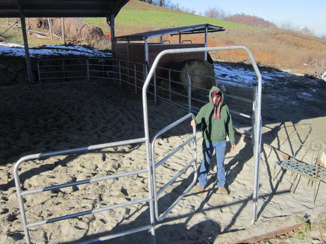 Sacha alla prima verifica del cancello dei fence