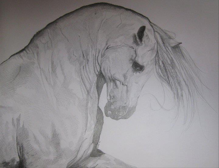 Arte rancho comancho for Cavallo disegno a matita