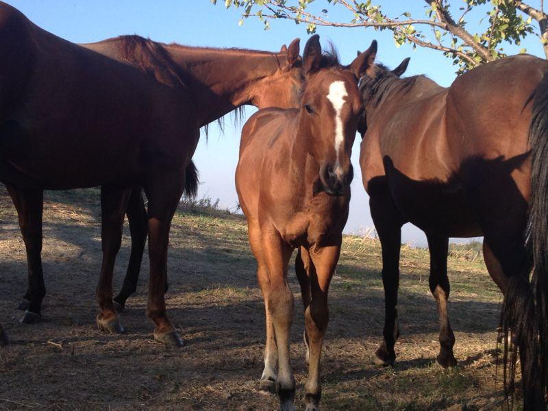 Arriva il primo inverno per i più giovani del Ranch